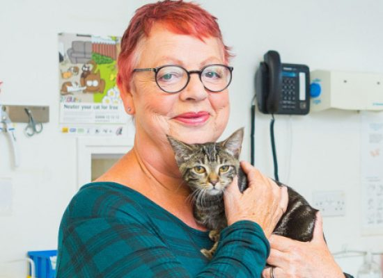 Telly Today: Jo Brand and her many cats