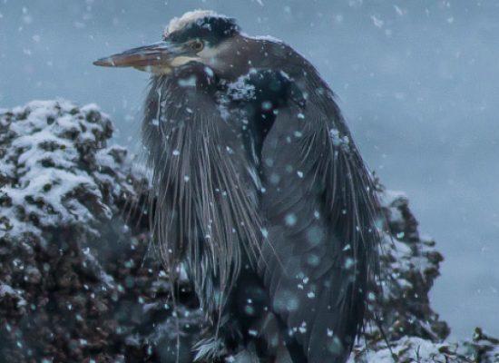 Alaska wildlife series for Channel 5